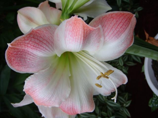 2008-10-01 | 植物园之旅
