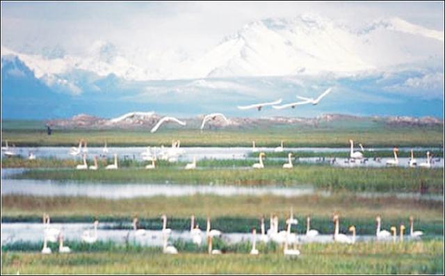 赛湖风景区是由名湖,名山和浓郁草原风情有机融合而成的一个省级多