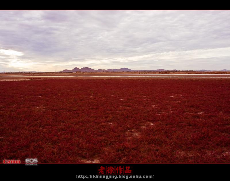 葫芦岛的红海滩