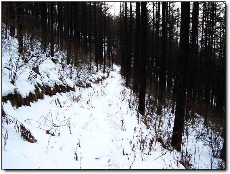 是陀顶了,顺着雪地上不知是人还是什么动物留下的纷乱的脚印,我们