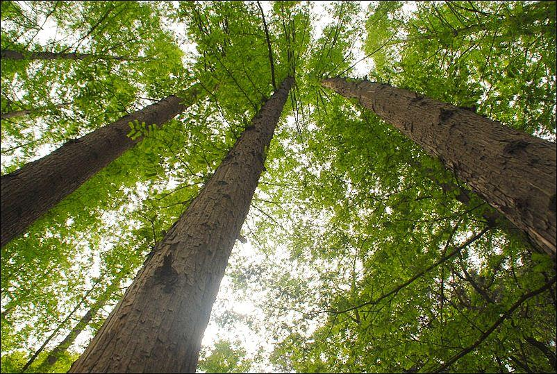 树叶图片,树叶素材,树叶图片大全-绘艺素材网, 叶是树进行光合作用的部位。叶子可以有各种不同的形状、大小、颜色和质感。叶子可以聚成一簇,也可以遍地散落。叶子的. Gif动画图片库-网页制作大宝库-网页动画图片库, 网页制作大宝库提供的gif动态图片栏目。收集整理了数万张gif动态图片,包含gif搞笑图片、人物类gif动画、标识符号类gif动态.