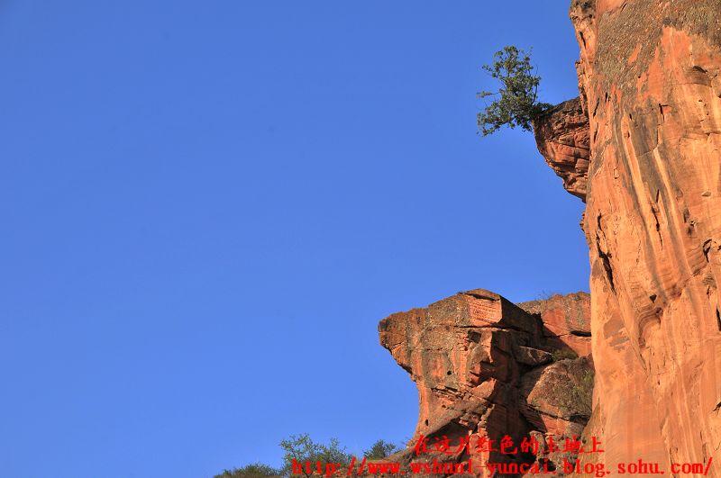 悬崖峭壁上生长着柏树