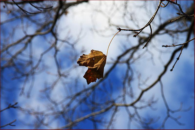 枫树叶粘贴画秋天
