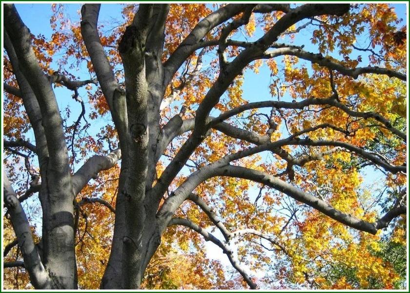 一半春天一半冬天大树图片