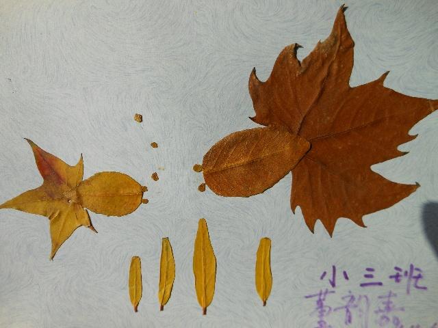 秋天来了,幼儿园布置了家庭作业,要带宝宝感受秋天的色彩和特点