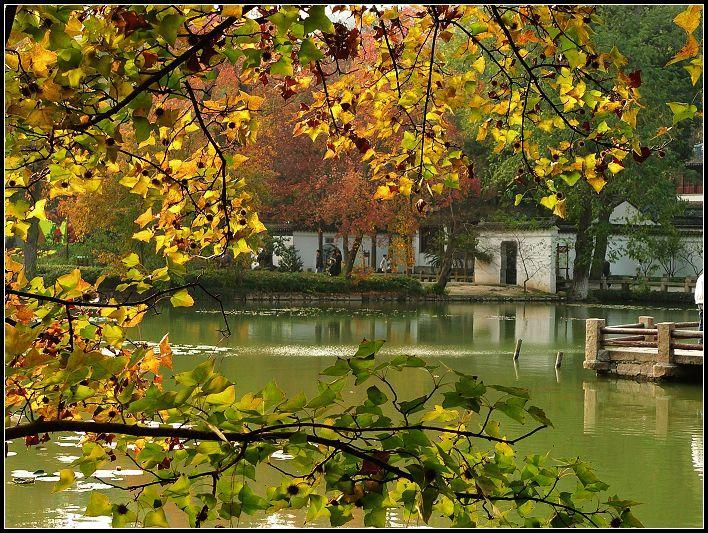 秋天树下乘凉