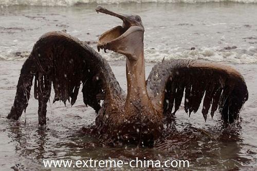 全球环境污染导致的生态危机