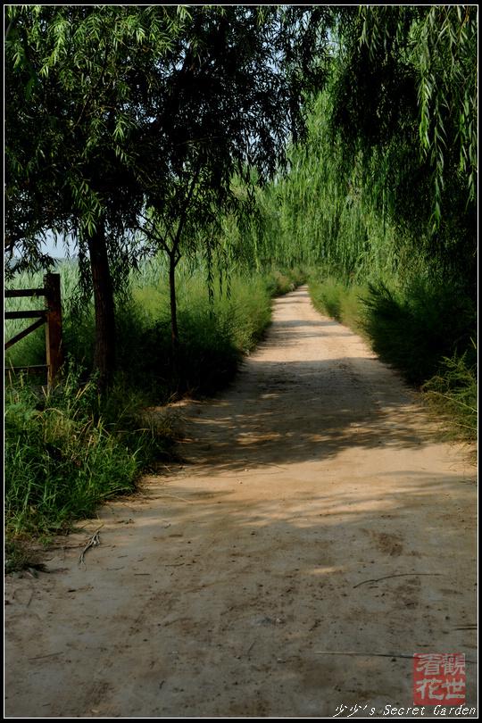 校园歌曲- 走在乡间的小路上