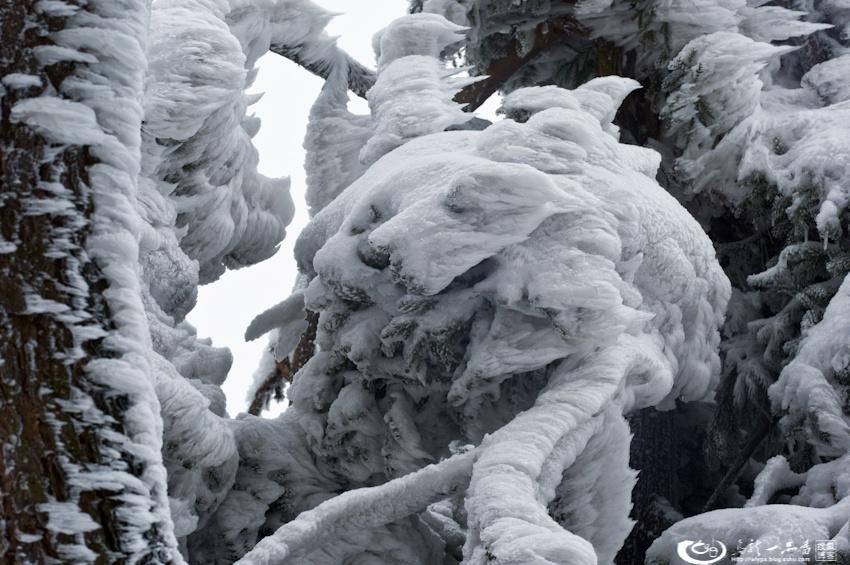 庐山雪淞奇观似动物世界