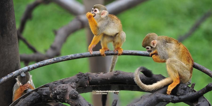 神雕山野生动物自然保护区【山东威海】