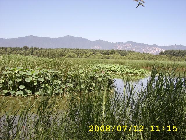 北京翠湖湿地公园 图片