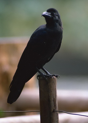 极乐鸟  巴西——金刚鹦鹉  南非——蓝鹤