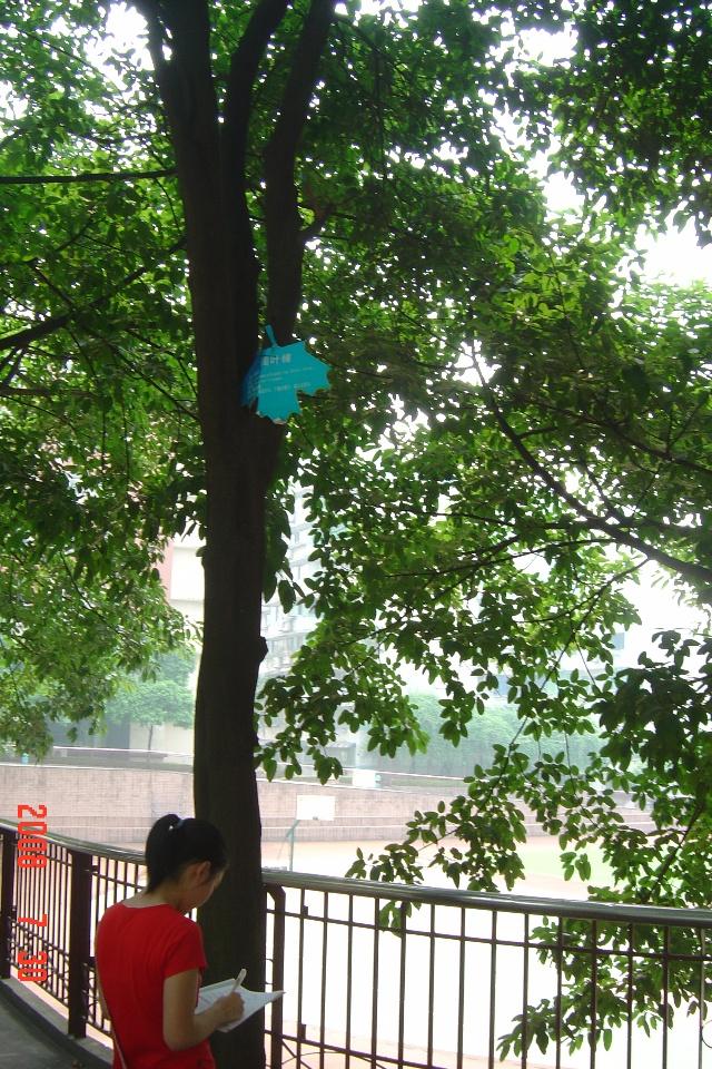 类别:乔木 别名:大叶榕,马尾榕,雀树