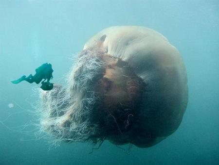 水母虽然是低等的腔肠动物
