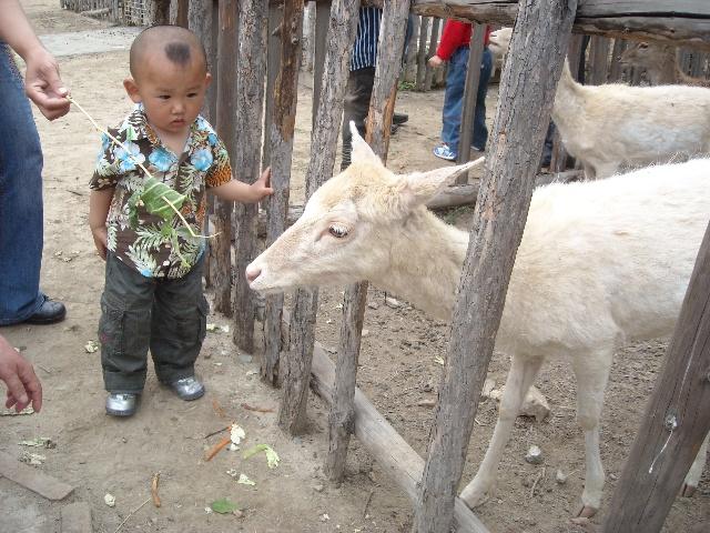 五·一 天津动物园 >>精灵小鬼头-彩色沙漠的博客