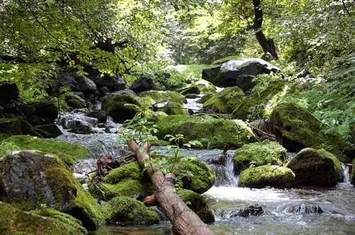 经规划后的香炉山风景区是以山岳,森林,水体和冰雪等自然景观为