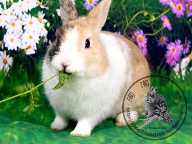 种兔新片(2011年11月23日拍)-大眼睛淘淘的幸福生活