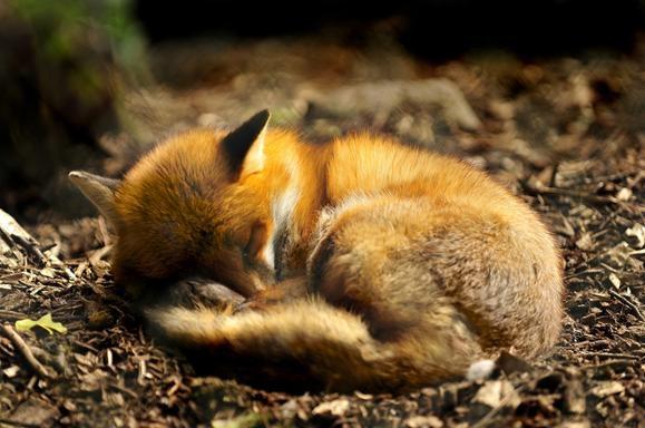 动物的销魂睡姿