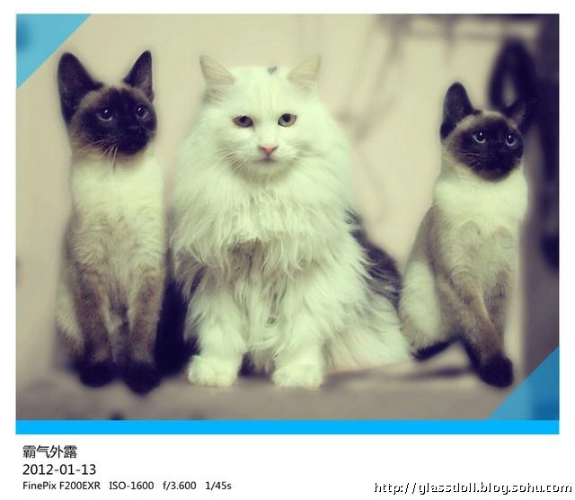 一堆小猫的卡通图片