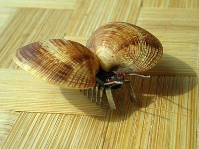 贝壳粘贴画图片大全贝壳粘贴画-粘贴贴就能完成的