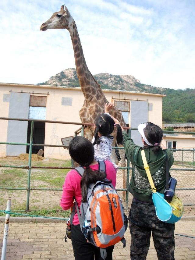 2011-10-4 在胶南野生动物园 照片